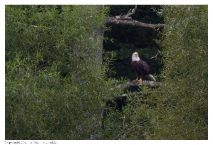 Ohio State Parks on the Air 2020 -- Bald Eagle